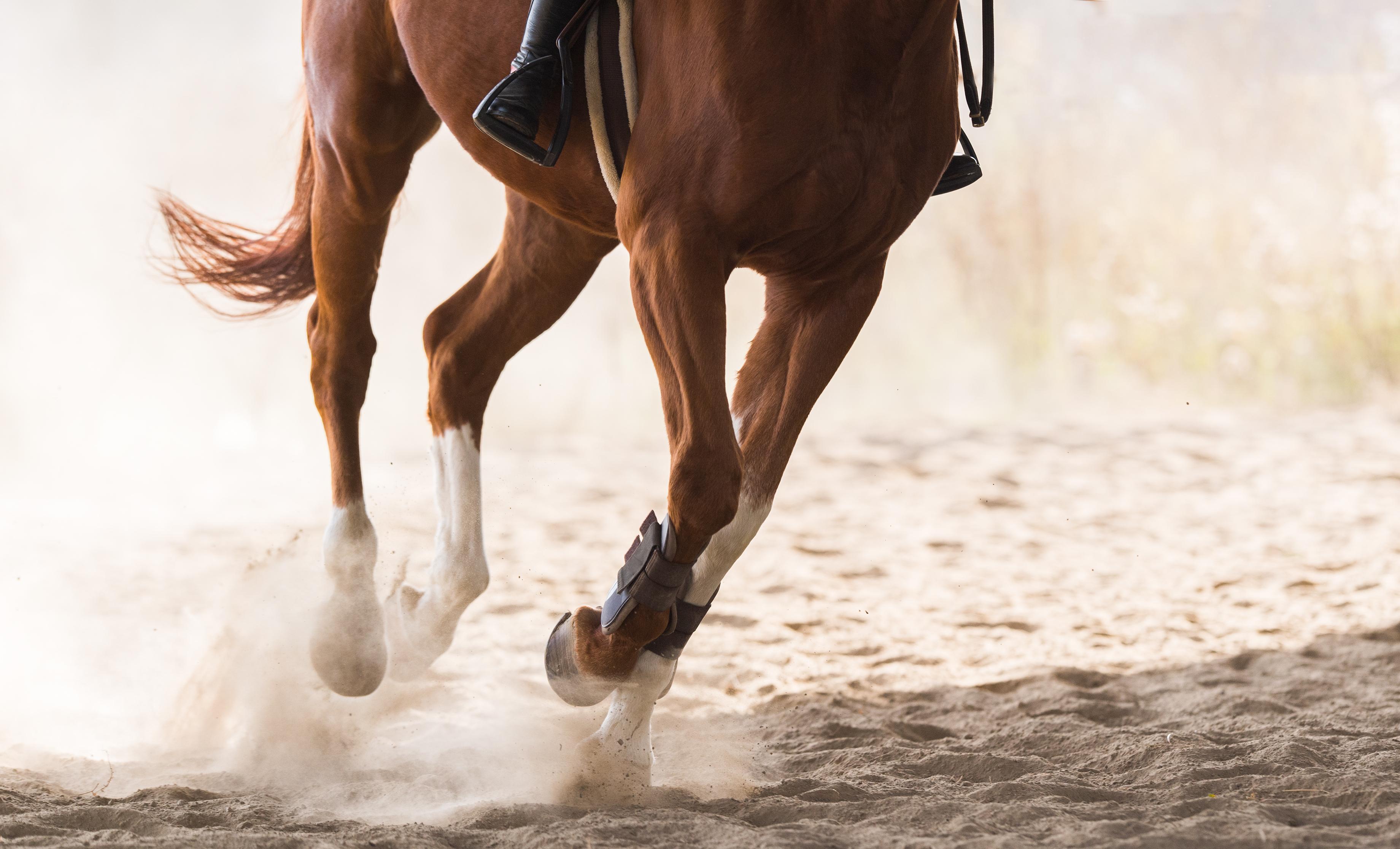 Arthrose chez le cheval - NACRICARE