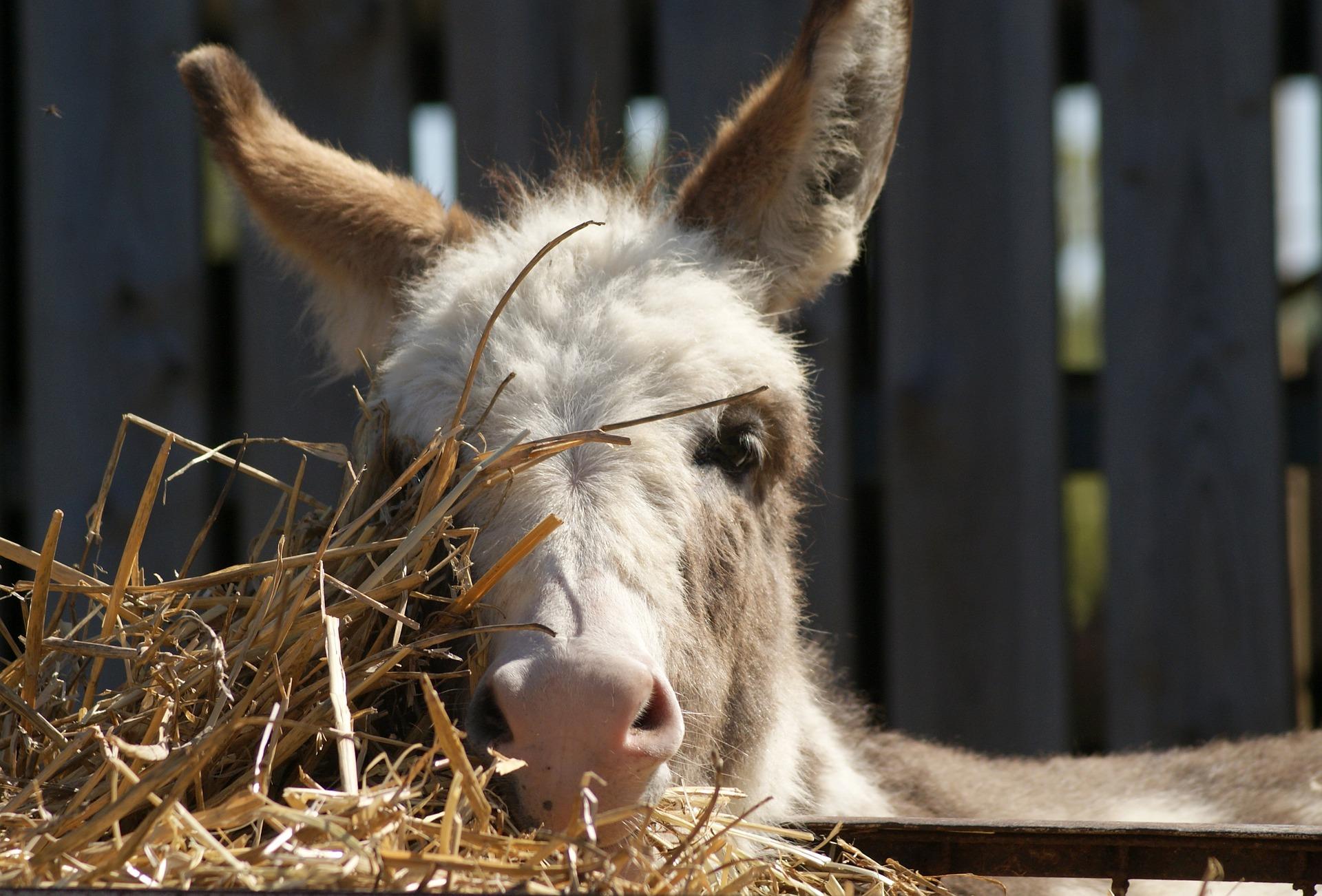 Ulcère cheval, âne, Alimentation cheval, âne