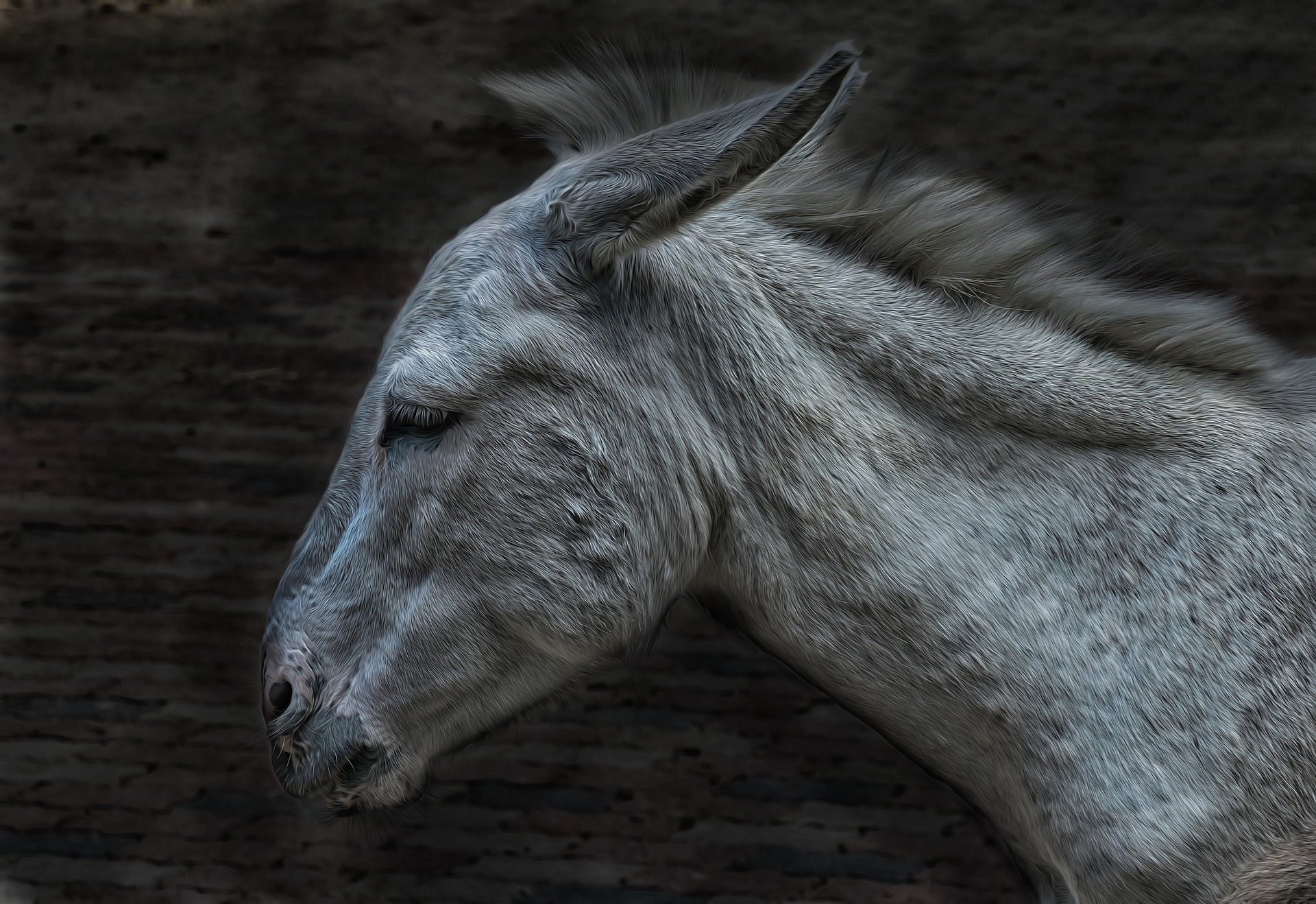 alimentation cheval agé, âne agé