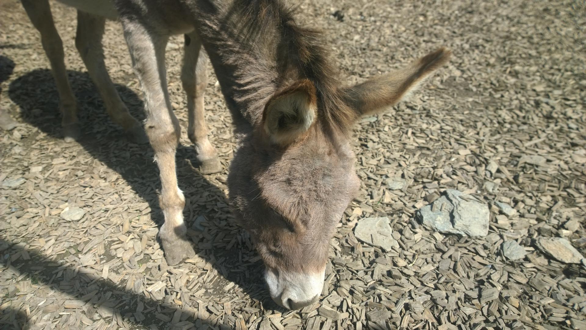 Onguent sabot, Graisse sabot, Produits naturels chevaux
